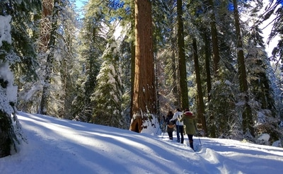 Winter tours in Yosemite
